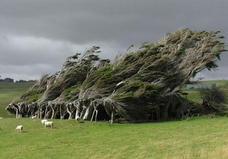 Poze Haioase - Copacii din Slope Point, extremitatea sudica a Noii Zeelande