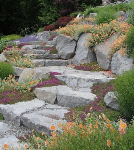 Poze Alei - Piatra si flori multicolore