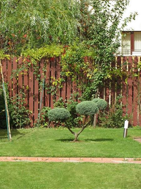 Poze Gradina de flori - Amenajare gradina cu alei din caramida, gazon, plante ornamentale
