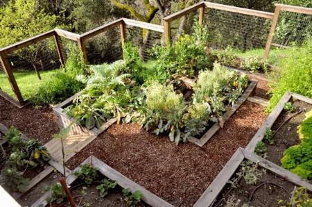 Poze Gradina legume - Intr-o gradina de legume bine organizata munca devine o placere