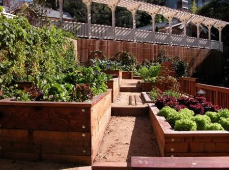 Poze Gradina legume - Straturi in paturi din lemn