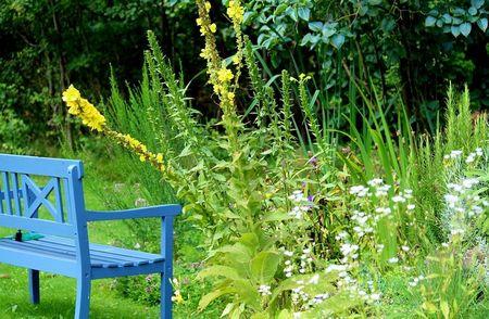Poze Gradina de flori - O bancuta albastra poate constitui un puct de atractie foarte apreciat al gradinii tale