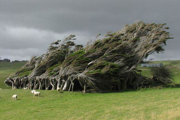 Copacii din Slope Point, extremitatea sudica a Noii Zeelande