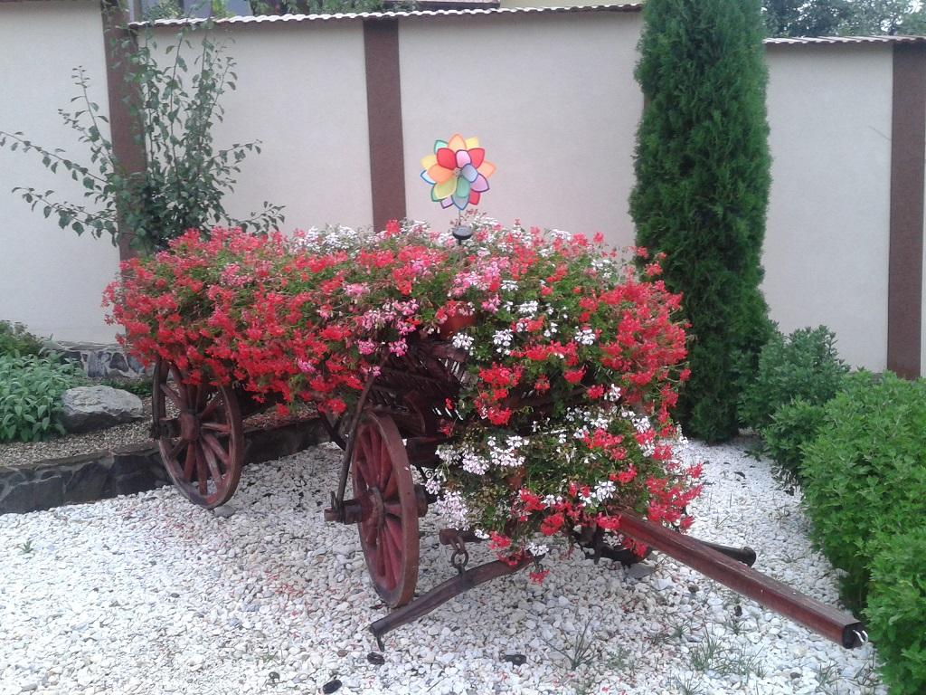 Un colt al curtii cu un superb car cu flori.