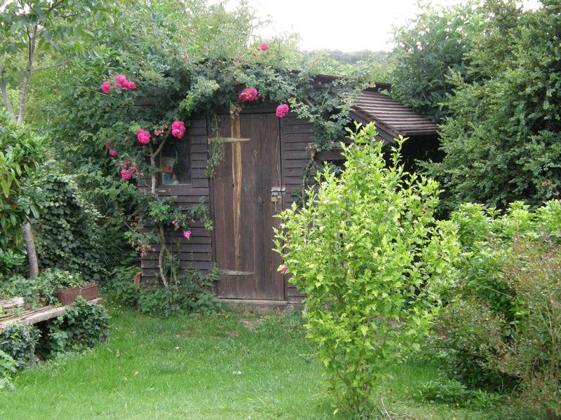Trandafir catarator si o casuta de gradina