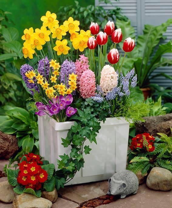 Ghiveci flori primavara