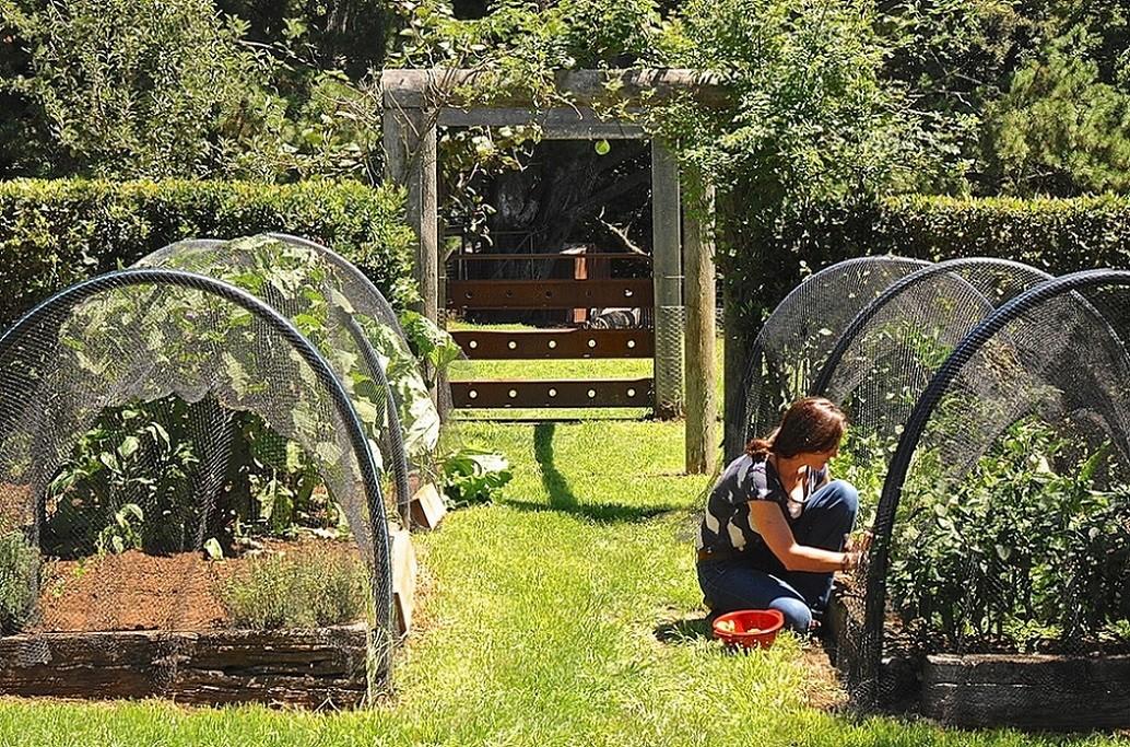 Relaxare activa in gradina de legume
