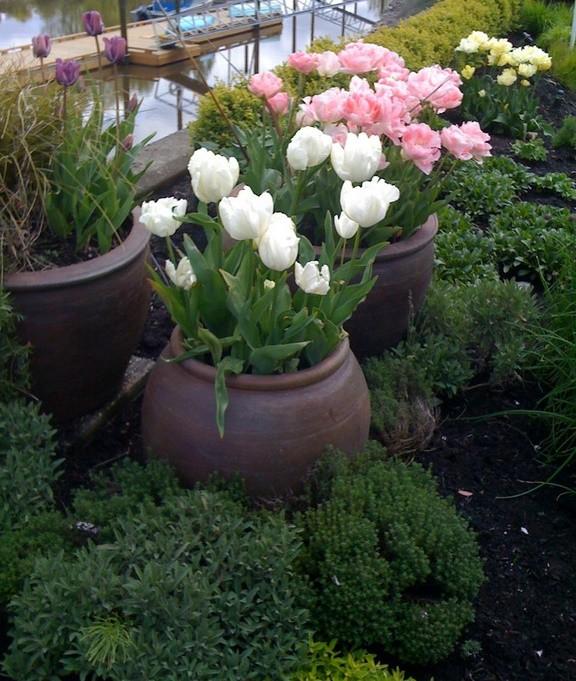 Gradina cu flori la ghiveci