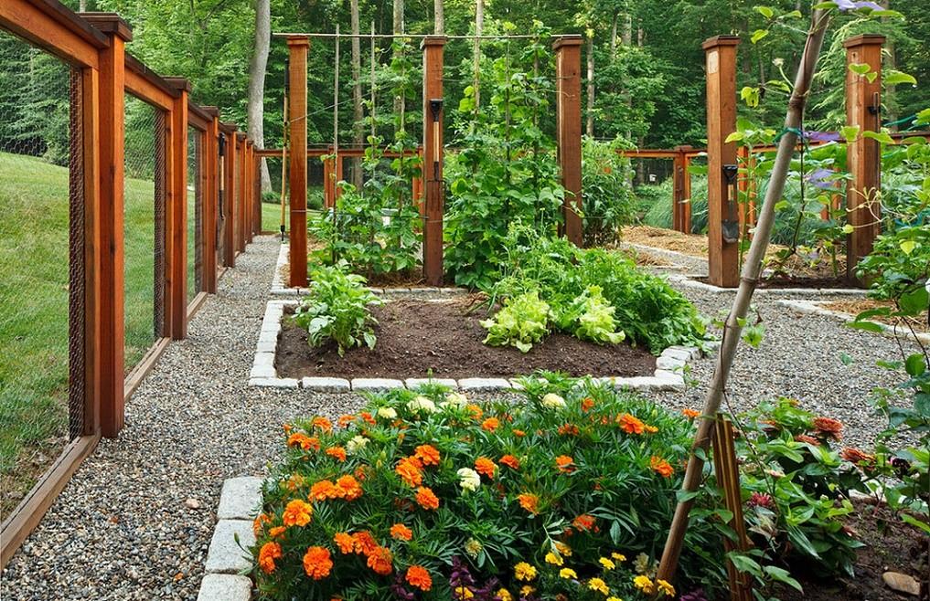 Plante cu flori in gradina cu legume