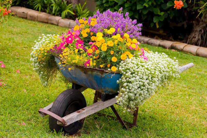 Roaba veche cu flori