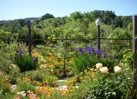 Poze Gradina de flori - Gradina rustica