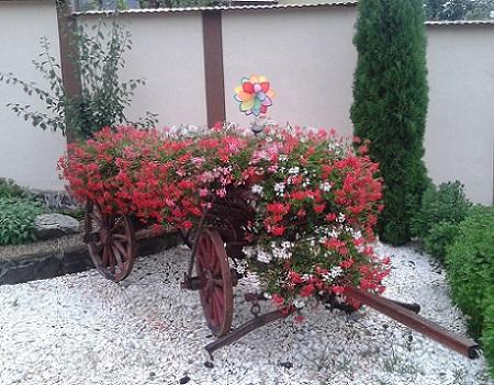 Poze Gradina de flori - Carul cu flori frumoase