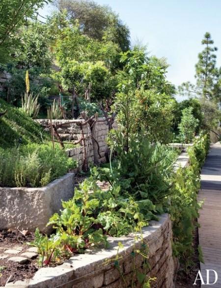 Poze Gradina legume - Gradina terasata de legume a supermodelului Gisele Bundchen