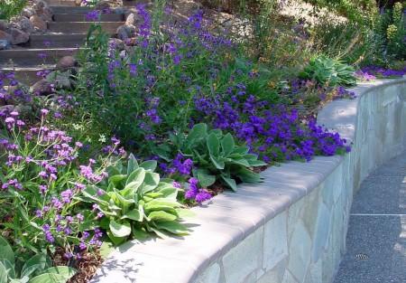 Poze Gradina de flori - Combinatie de plante cu flori albastre si violet
