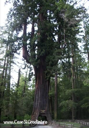 Poze Haioase - copac_arc_de_triumf.jpg