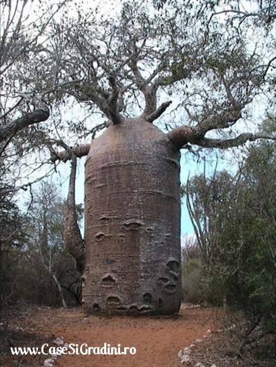Poze Haioase - copac_cilindru.jpg