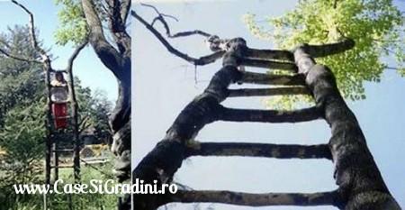 Poze Haioase - copac_scara.jpg