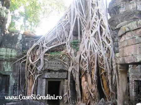 Poze Haioase - copac_templu.jpg