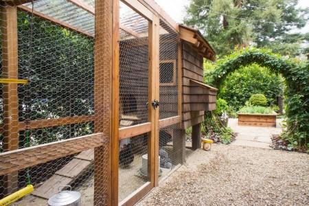Poze Gradina legume - Cotet pentru pasari in gradina de legume