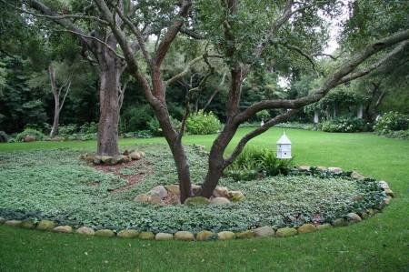 Poze Gradina de flori - Borduri de piatra si un covor vegetal in jurul copacilor