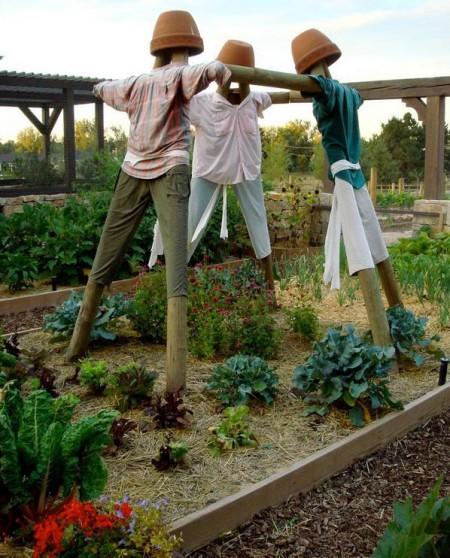 Poze Gradina legume - Sperietori de pasari pentru gradina de legume