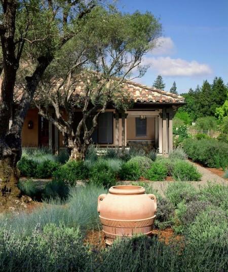 Poze Gradina de flori - Gradina mediteraneana cu lavanda si maslini seculari