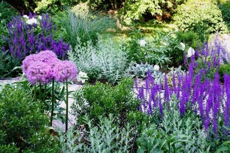 Poze Gradina de flori - Gradina cu plante aromatice