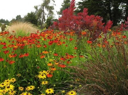 Poze Gradina de flori - Gradina rustica cu flori de camp