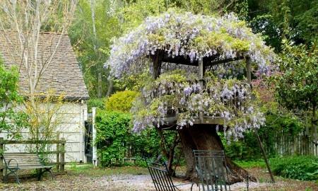 Poze Foisor si pavilion - Foisorul din copac