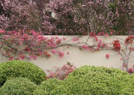 Poze Garduri si porti - gard-decorat-flori.jpg