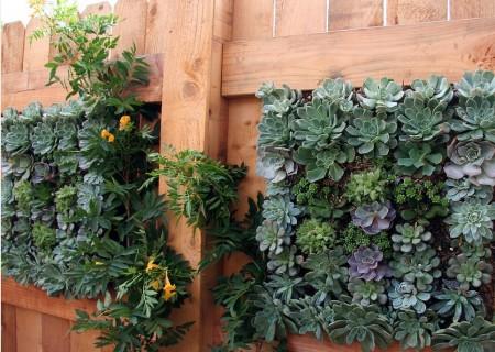 Poze Garduri si porti - Gard din lemn decorat cu mici portiuni de gradina verticala