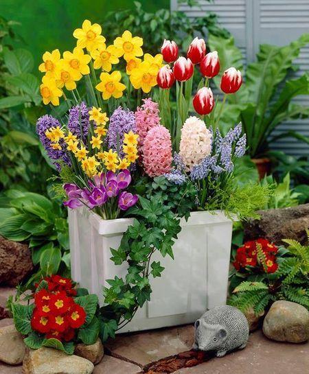 Poze Gradina de flori - Ghiveci cu cele mai frumoase flori de primavara