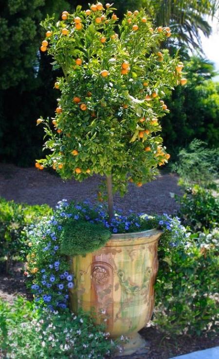 Poze Gradina de flori - Combinatii de plante in acelasi ghiveci