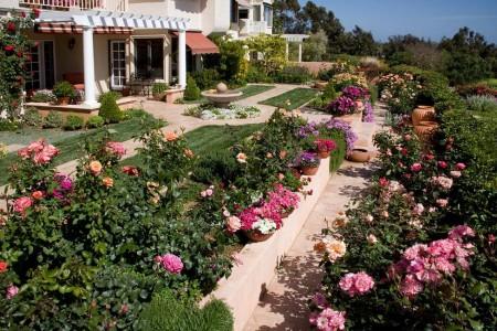 Poze Gradina de flori - Trandafirii, nelipsiti din gradina iubitorilor de flori