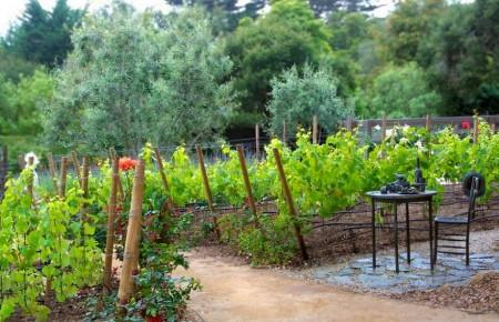 Poze Gradina legume - Trandafiri si vita de vie in gradina