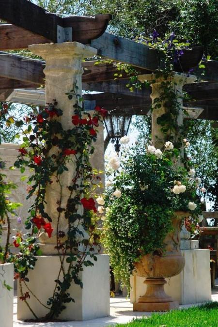 Poze Pergola - Plante cataratoare cu flori