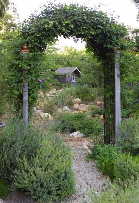 Poze Pergola - Arcada de gradina cu plante cataratoare