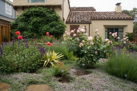 Poze Gradina de flori - Lavanda si trandafirii, plante nelipsite din gradina mediteraneana