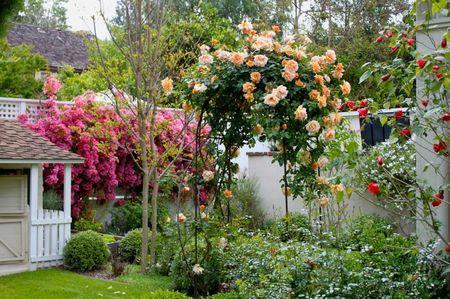 Poze Gradina de flori - Plantele cataratoare cu flori aduc mai mult volum in gradina