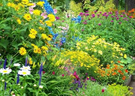 Poze Gradina de flori - Flori multicolore intr-o superba gradina rustica englezeasca