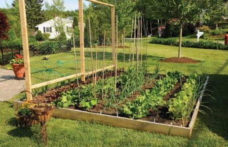 Poze Gradina legume - Gradina legumelor