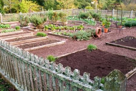 Poze Gradina legume - O gradina generoasa pentru cultivarea legumelor