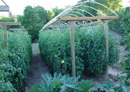 Poze Gradina legume - Suport pentru tomate