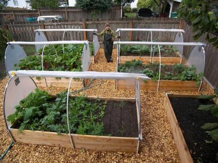 Poze Gradina legume - Cum sa-ti faci singur cel mai simplu solar de gradina!