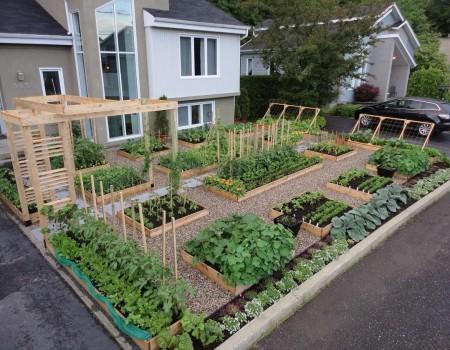 Poze Gradina legume - O gradina de legume riguros organizata