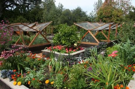 Poze Gradina legume -