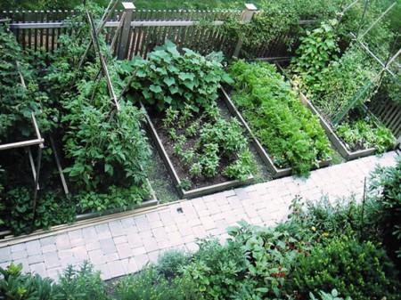 Poze Gradina legume - Paturi din scanduri pentru gradina de legume