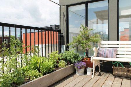 Poze Gradina legume - Gradina cu legume si ierburi aromatice pe terasa