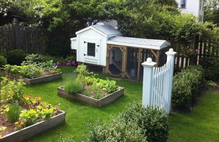 Poze Gradina legume - Legume si oua proaspete in gradina din spatele casei