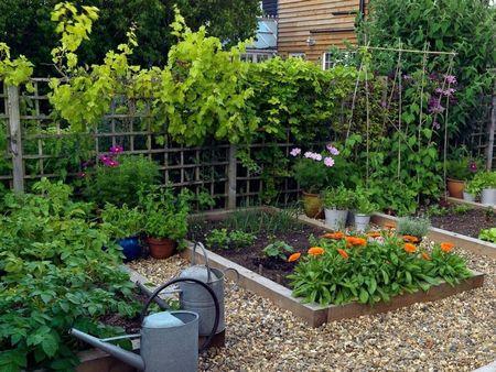 Poze Gradina legume - O gradina de legume bine organizata